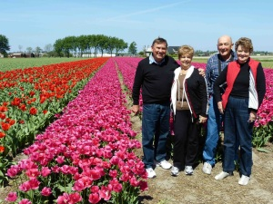 Picture in Tulip fields