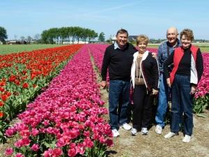 Picture in Tulip fields