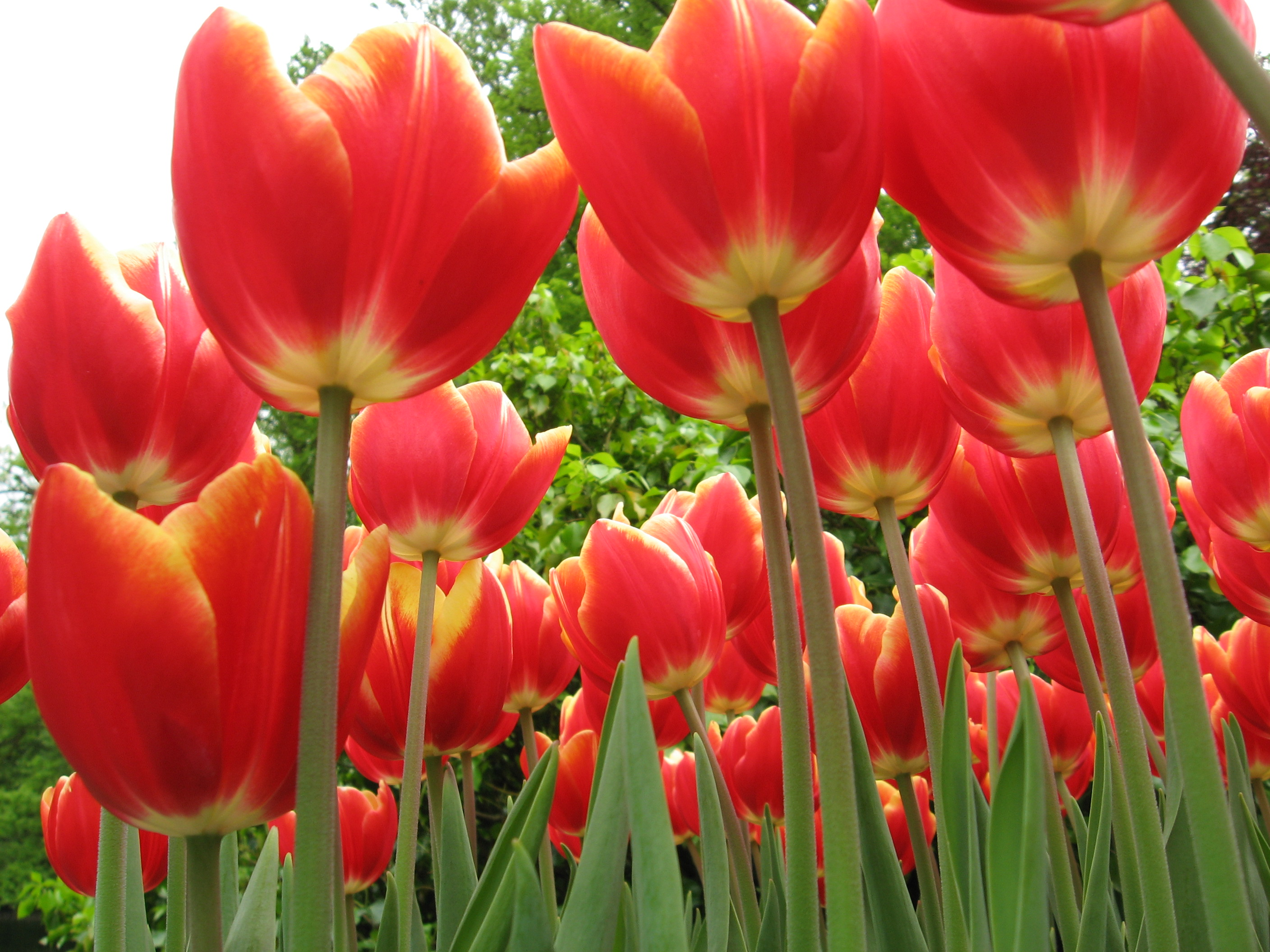 301 moved permanently for What season are tulips